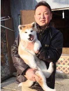 d25p02秋田犬ブリーダー1